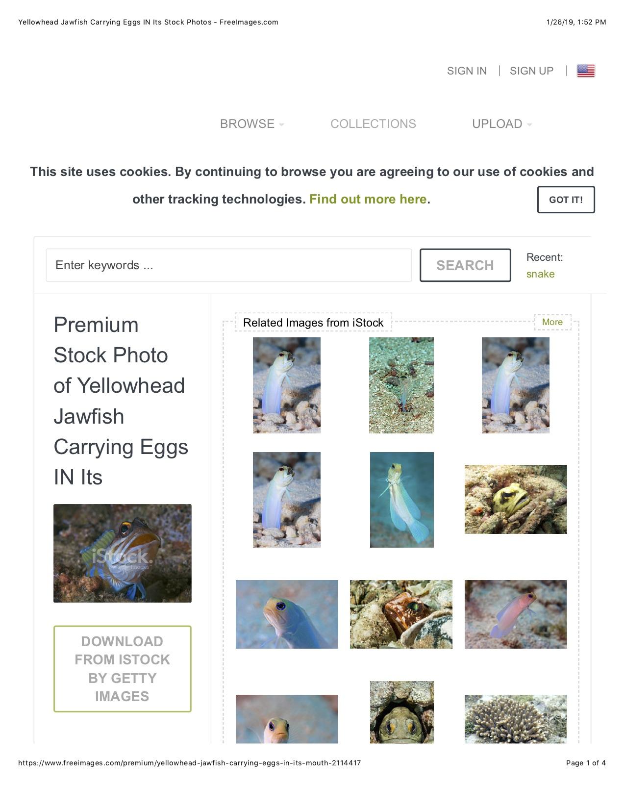 iStockPhoto Reviews - 73 Reviews of Istockphoto com   Sitejabber